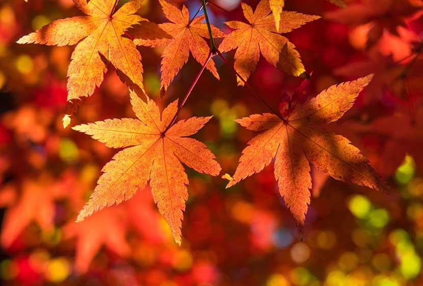 秋のお彼岸